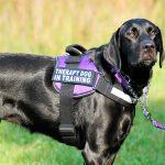 Claves de la terapia con animales para discapacitados